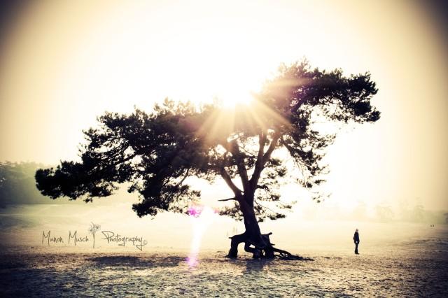 Sunny winterday